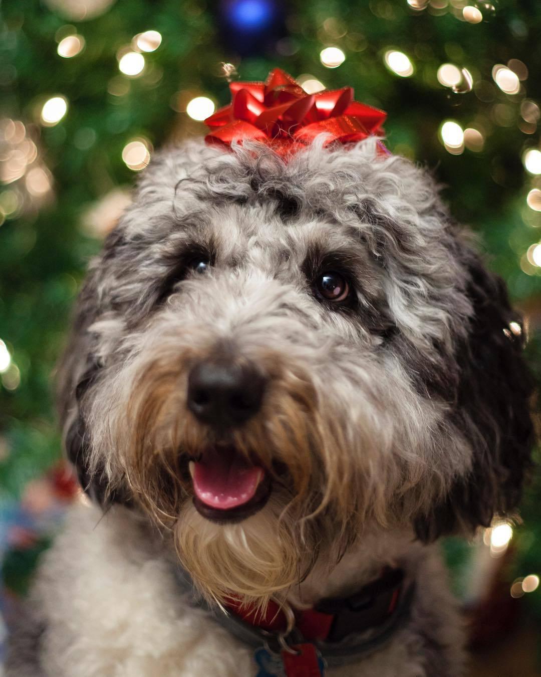 A dog with a bow on head