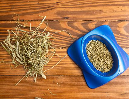 Rabbit food pebbles in blue bowl and straw laying on wood
