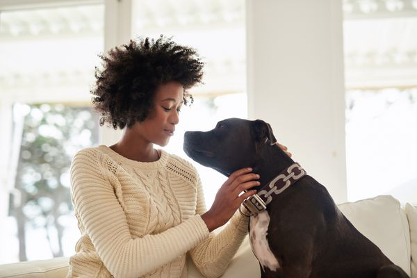 Person petting black terrier