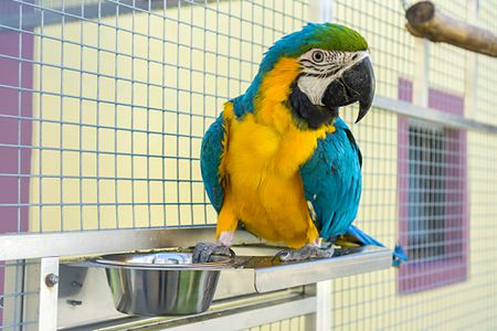 How to Choose a Good Bird Breeder
