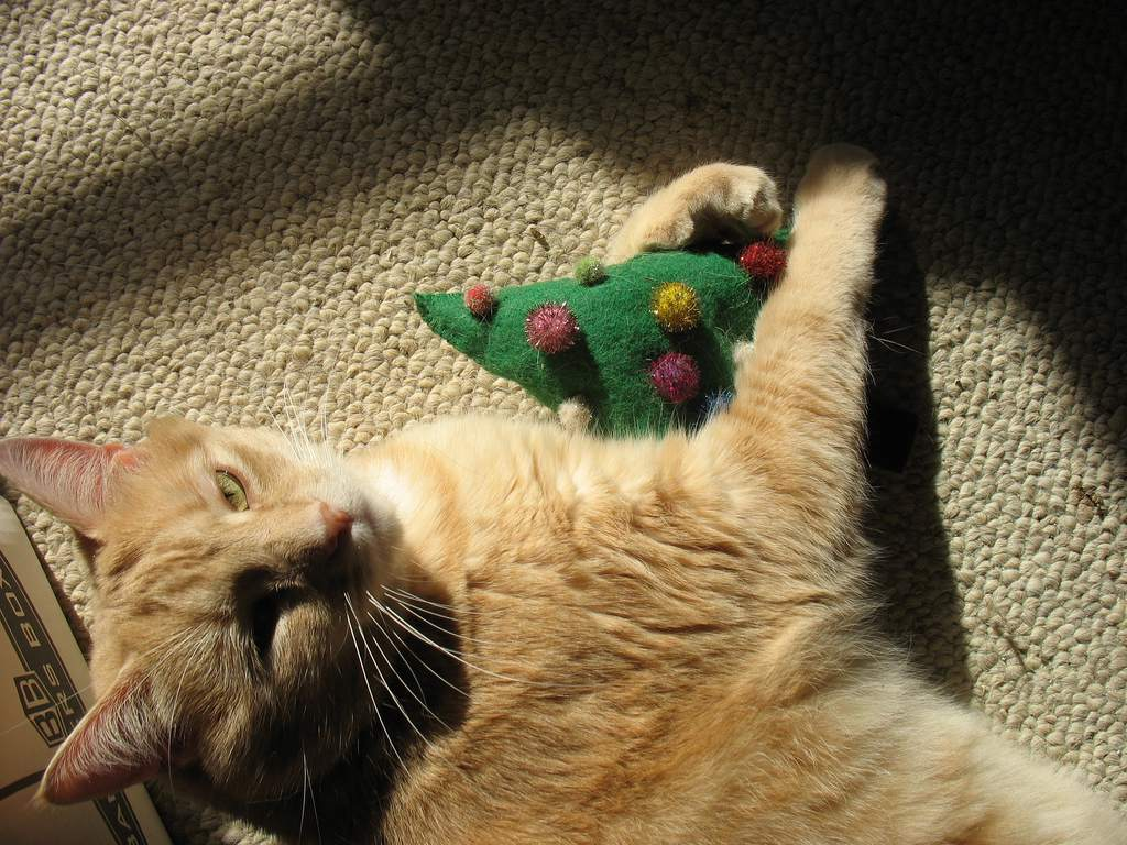 cat playing with christmas toy