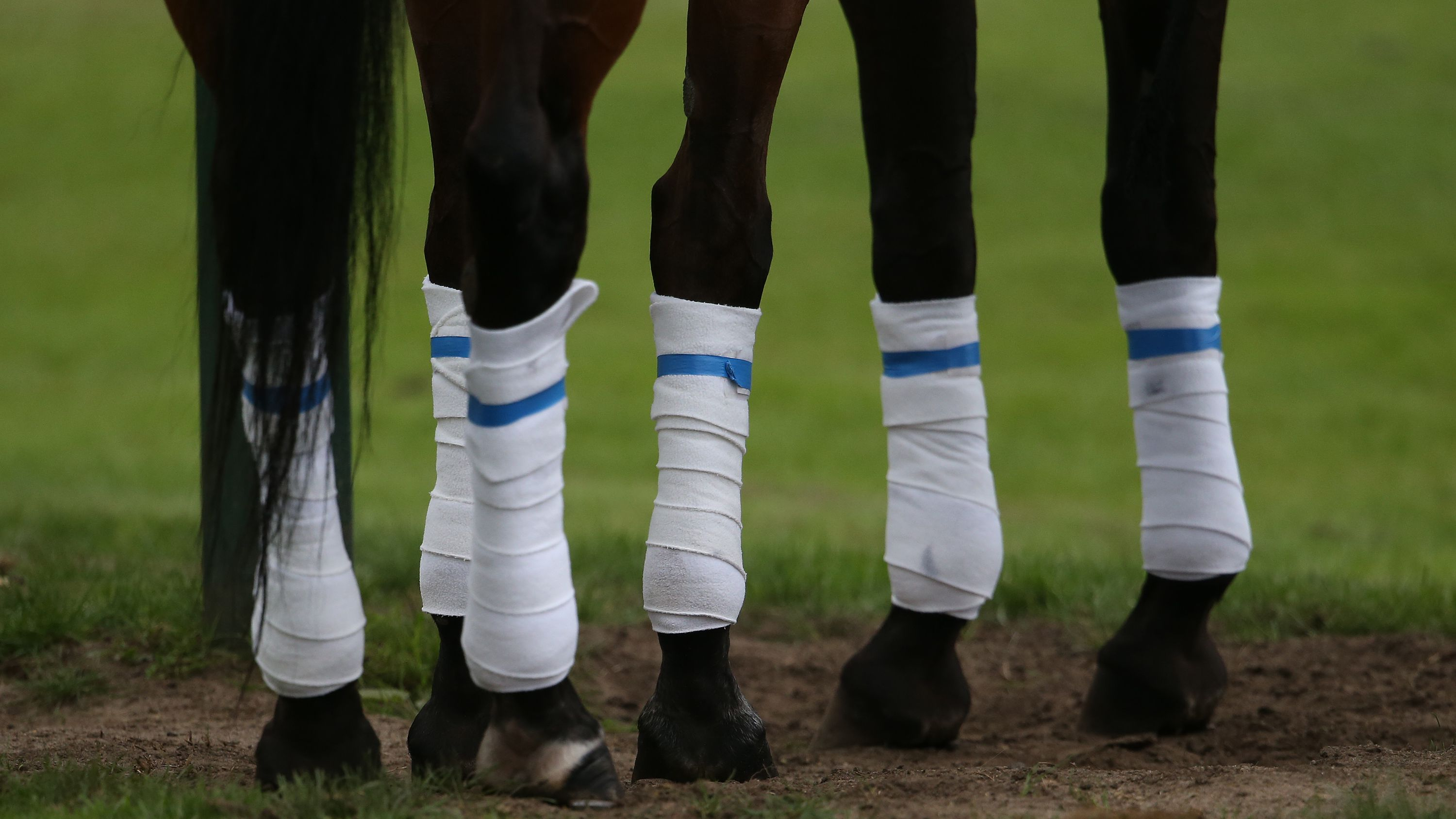 47be6dbd67 Selecting Leg Wraps or Bandages for Your Horse