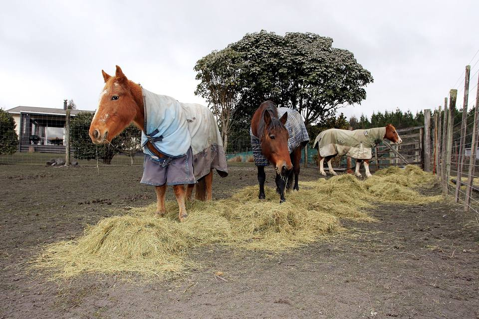 Horses fed large amounts of hay all at once tend to eat the best bits and waste the rest.