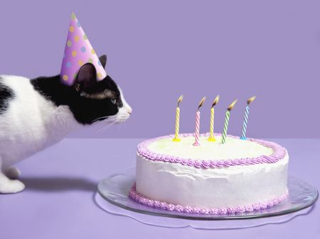 A Cat Celebrating Birthday