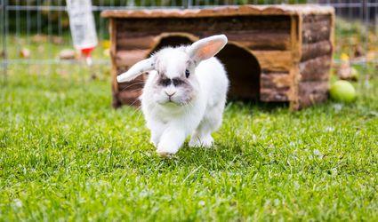 Close-Up Of Rabbit Walking On Grassy Field