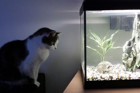 Fish Tank For Cats | Adjust Aquarium Lighting To Support Plants And Fish