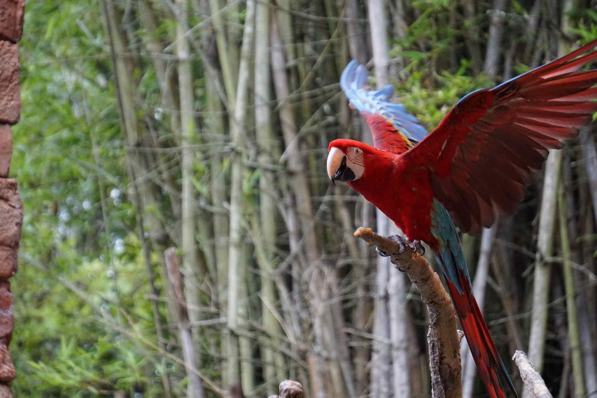Parrot flapping wings