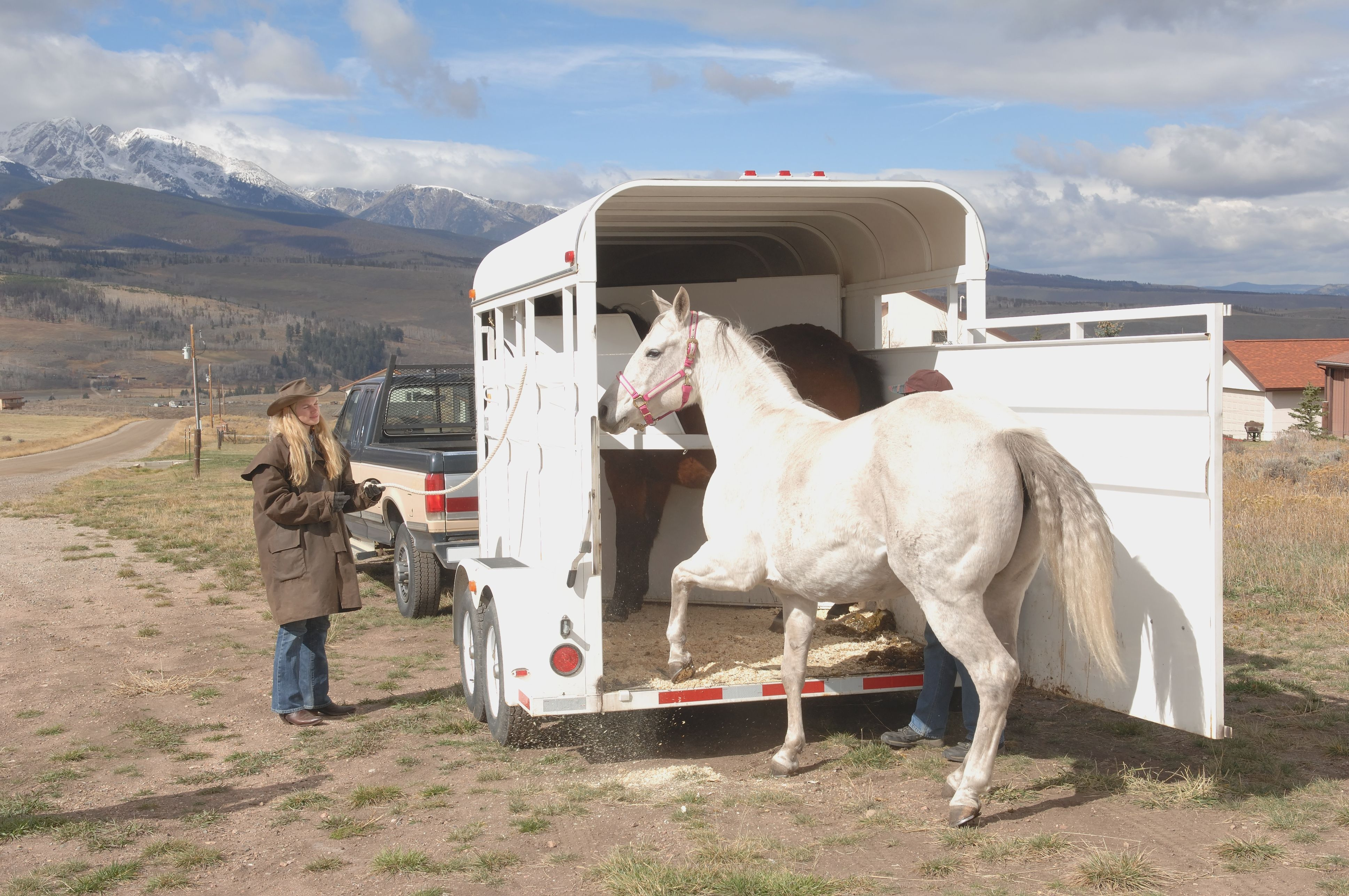 Horse Stepping Into Trailer