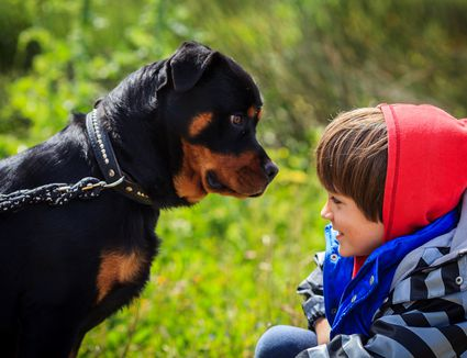 A boy in front of a rottweiler