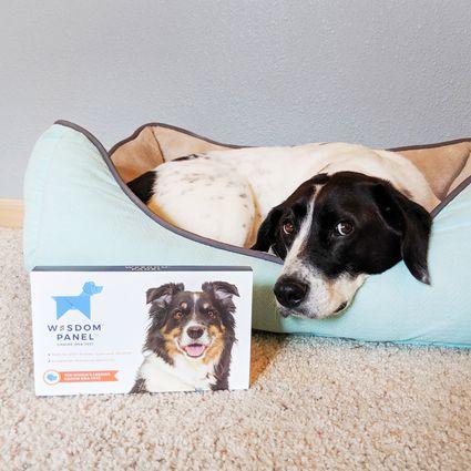 Wisdom Panel Canine DNA Test