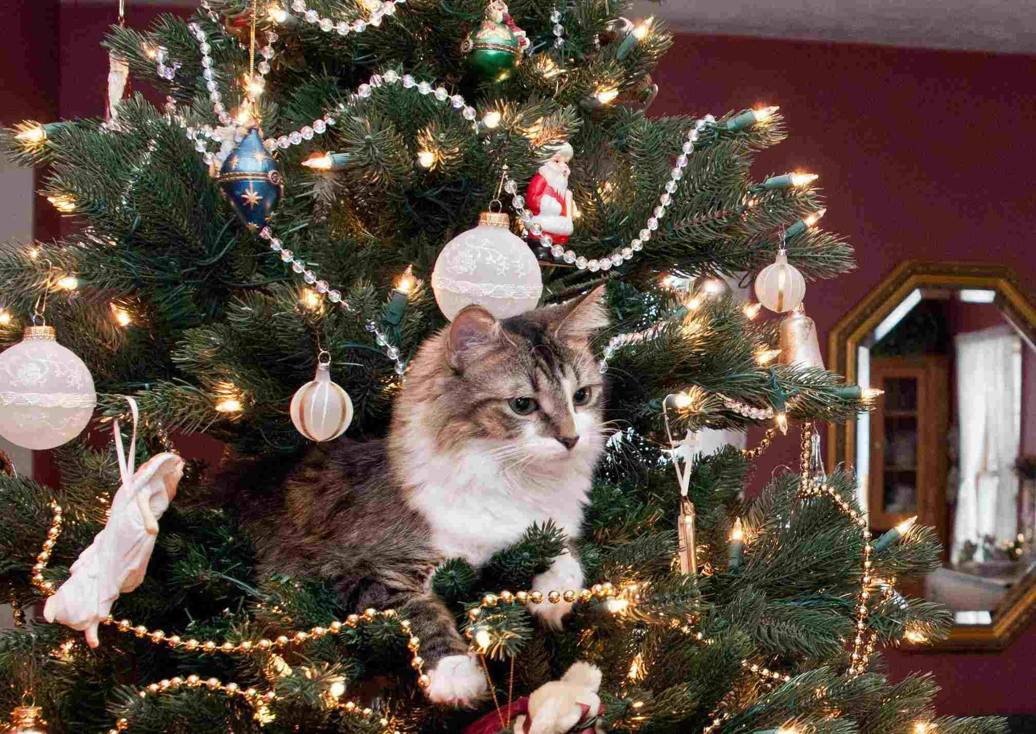 A cat inside a Christmas tree
