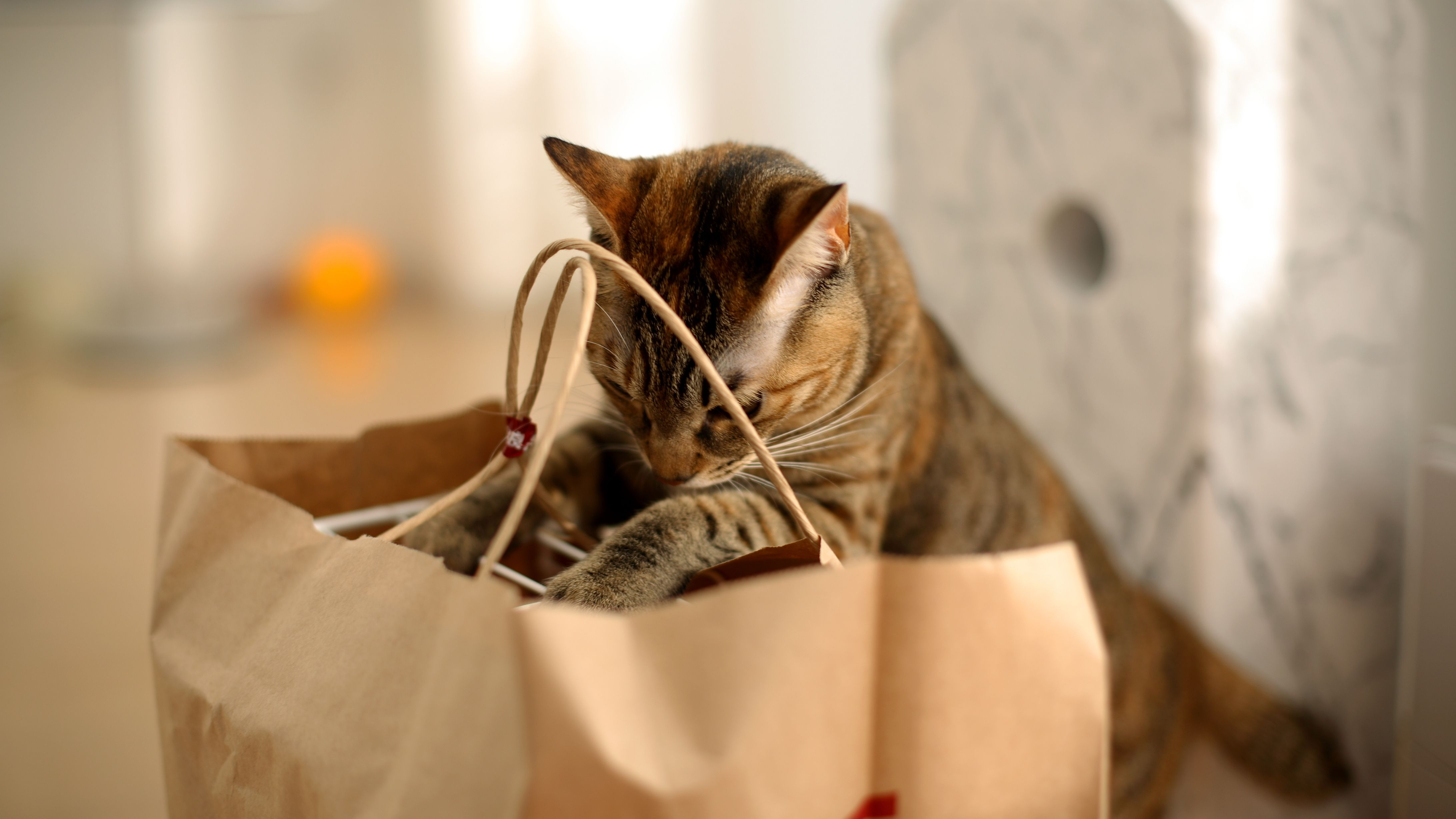 What To Buy For Your New Cat