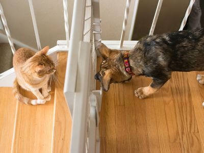Can Dogs and Cats From the Same Litter Mate?