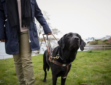 Black seeing-eye dog leading visually impaired woman