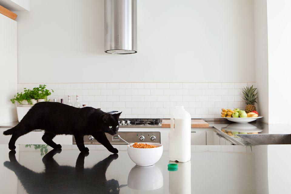 Gato negro en mostrador con leche y cereal