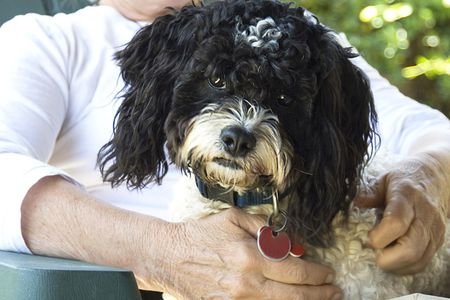 How To Treat Dementia And Senility In Dogs