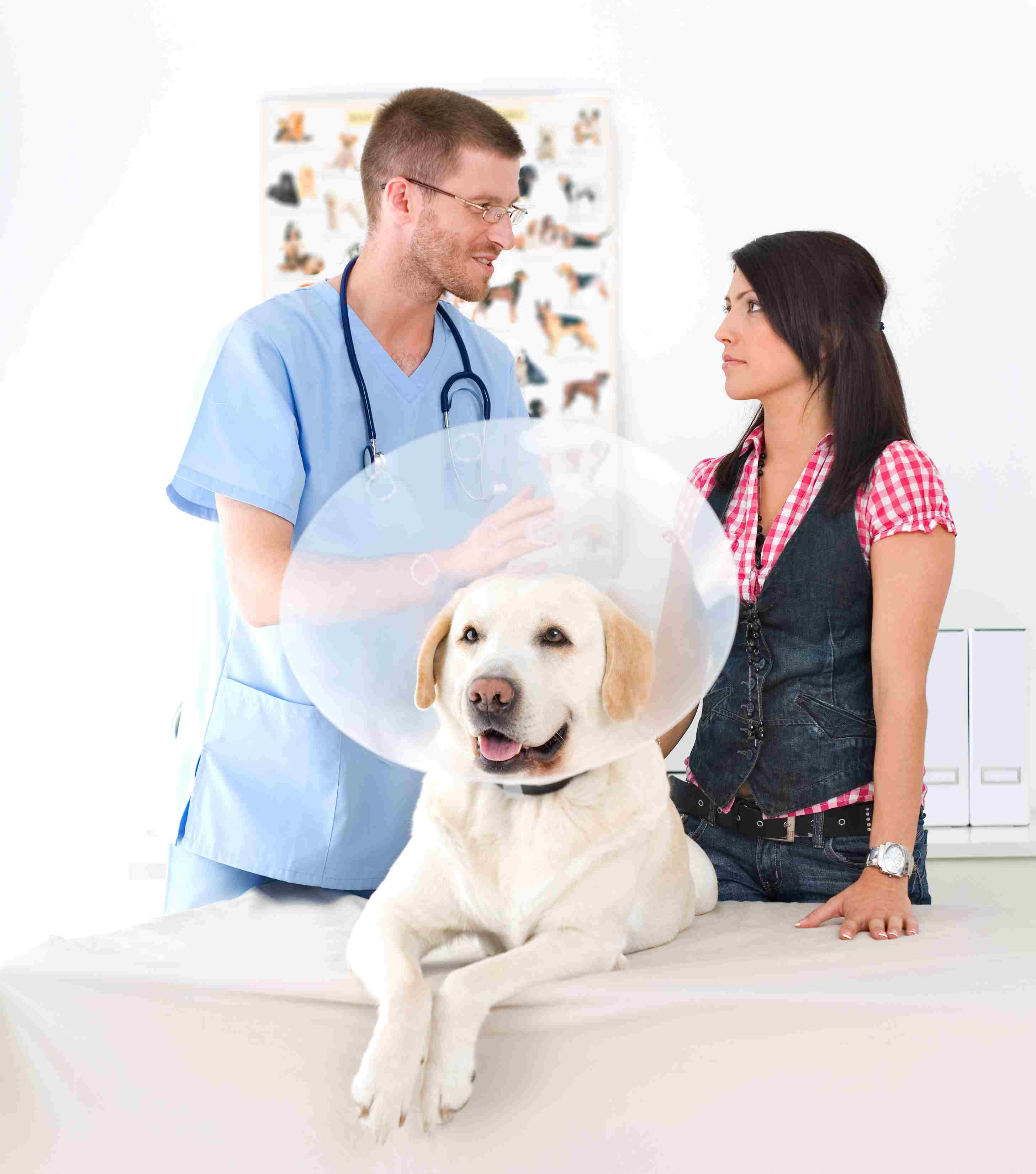 veterinarian and dog owner with labrador retriever