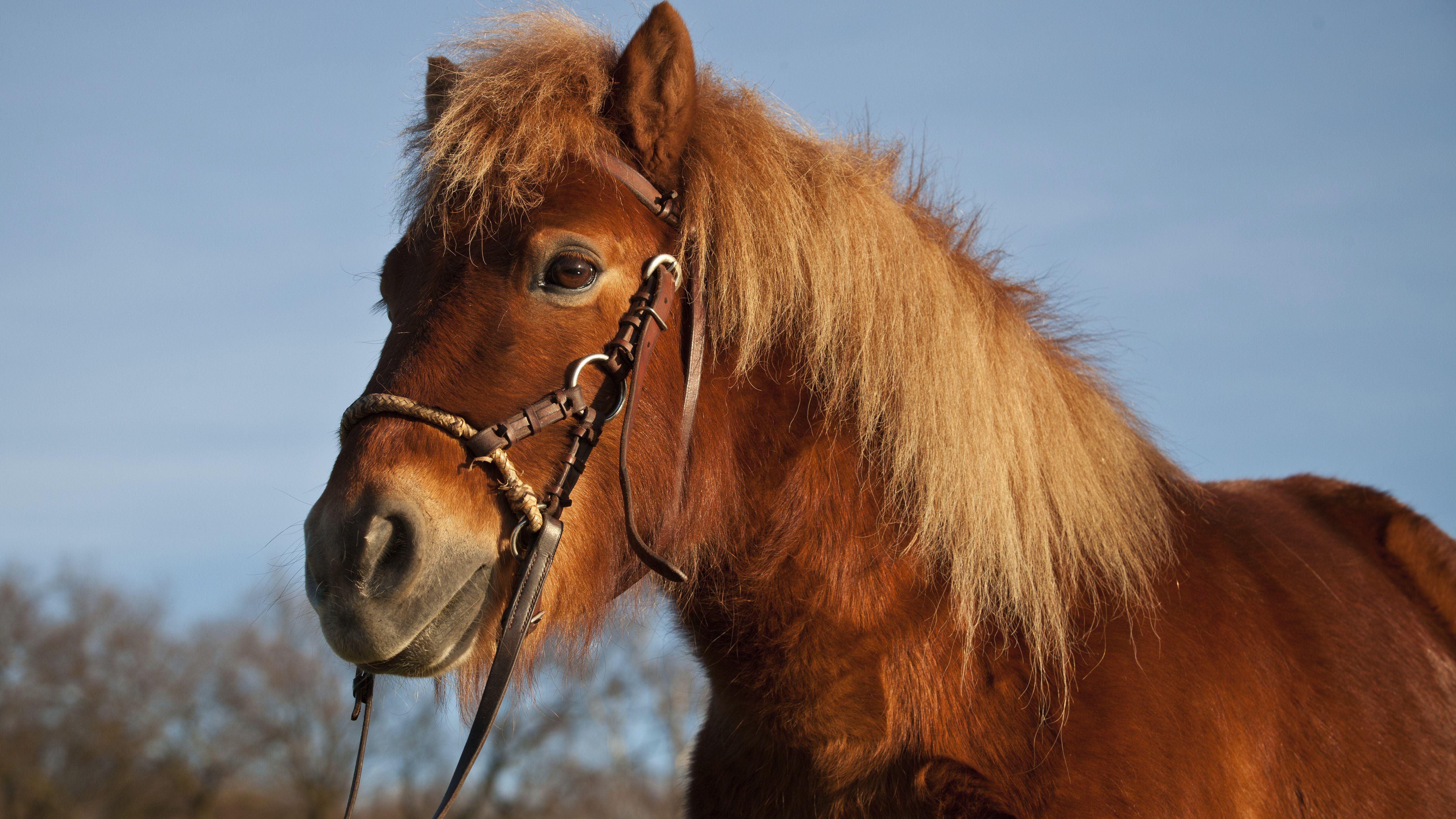 NEW HACKAMORE TRAINING TACK FLEECE LEATHER HORSE WESTERN SHANKS BITLESS BIT