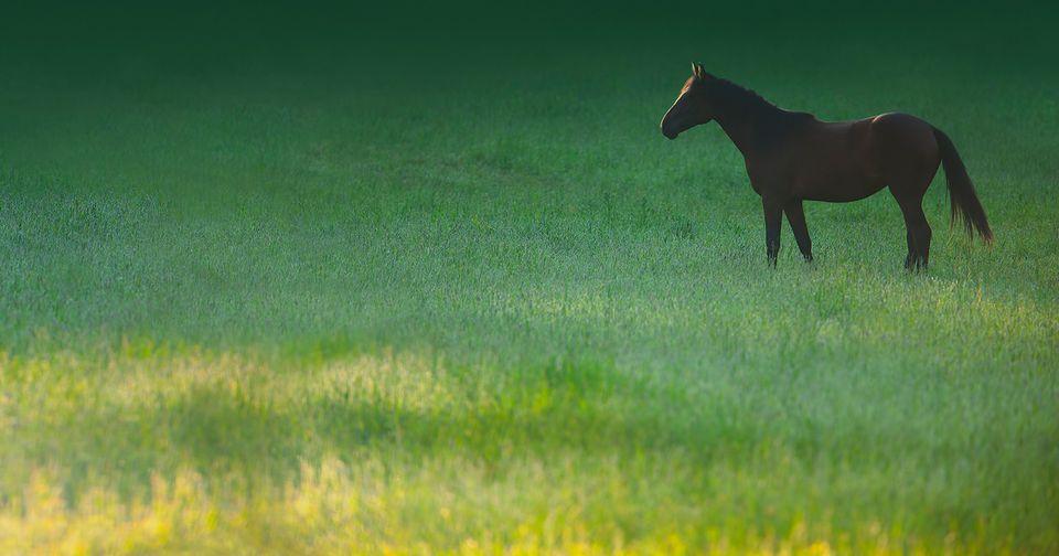 Caballo pastando en el prado de hierba