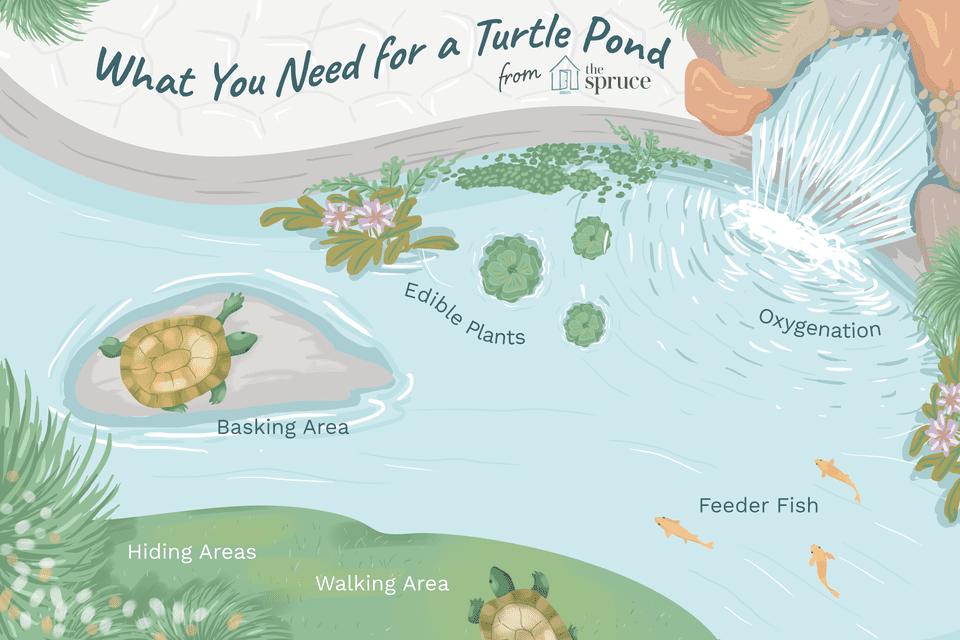 Ilustración de lo que necesitas para un estanque de tortugas