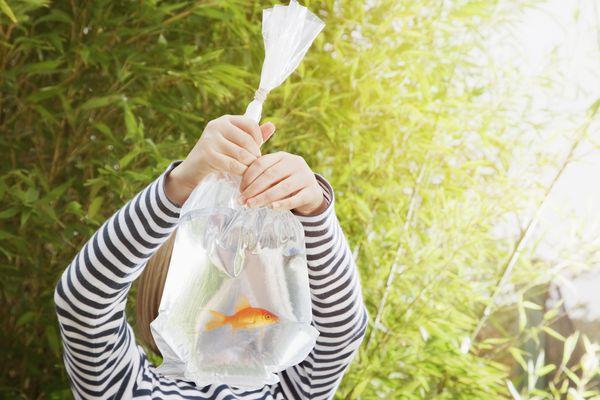Girl holding goldfish in plastic bag