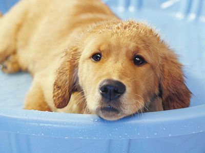 Recognizing And Treating Hypothermia In Puppies