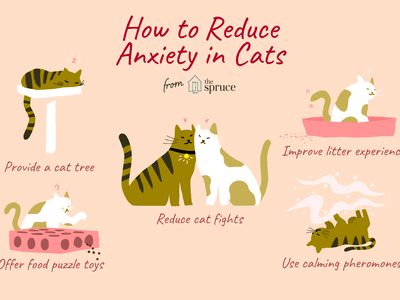 how to reduce anxiety levels in your cat