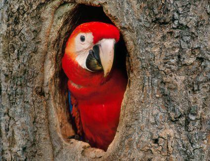 Internal and External Anatomy of Birds