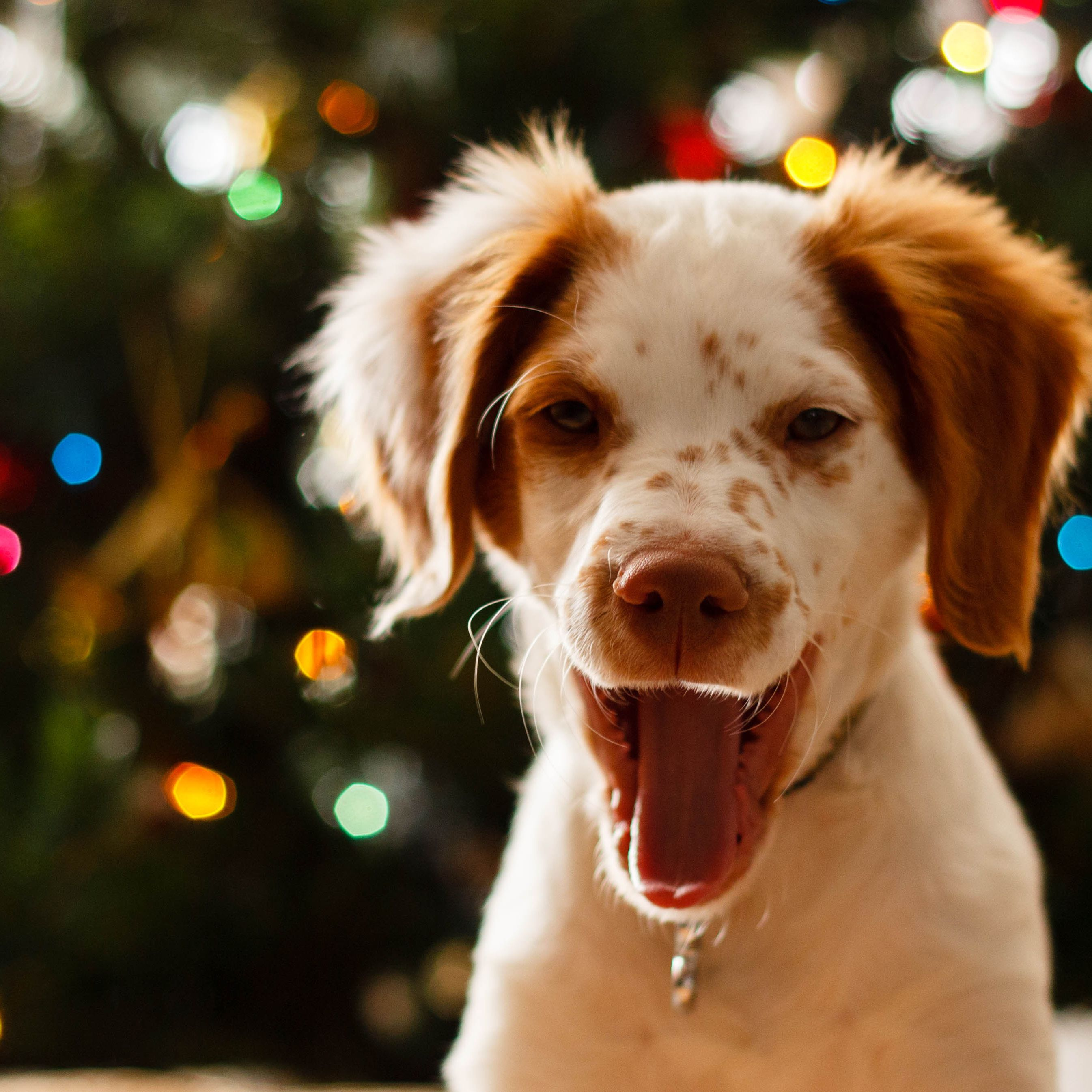 The 10 Best Christmas Gifts for Your Dog of 2019