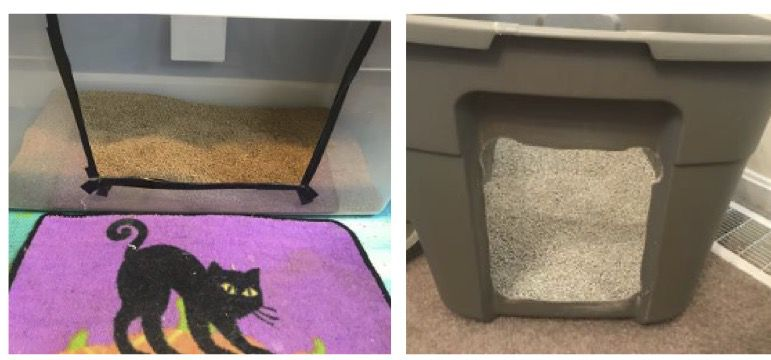 Appropriate Sized Low Litterboxes