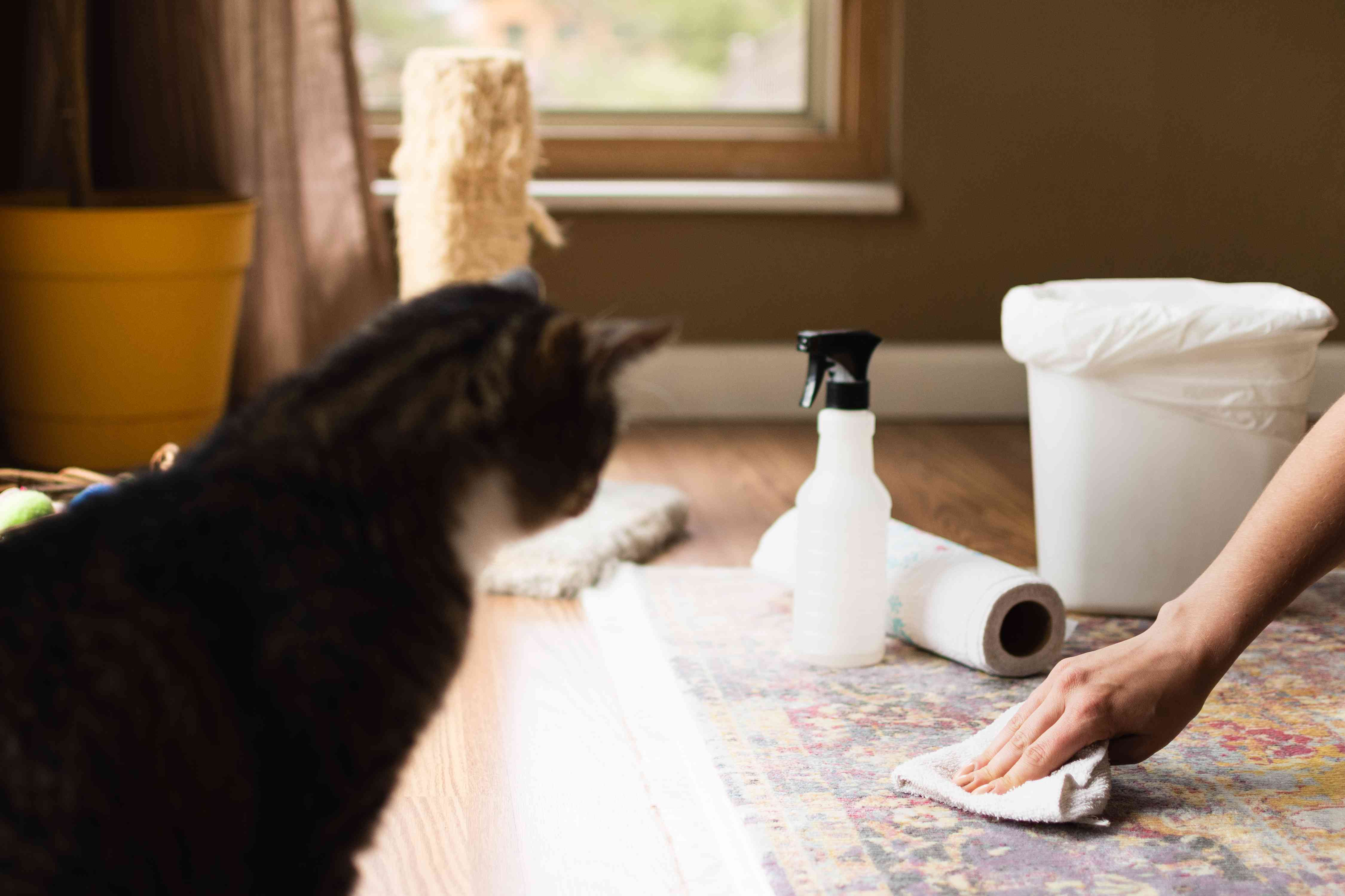 Cat urine cleaned off rug with white cloth and spry bottle with cleaning solution
