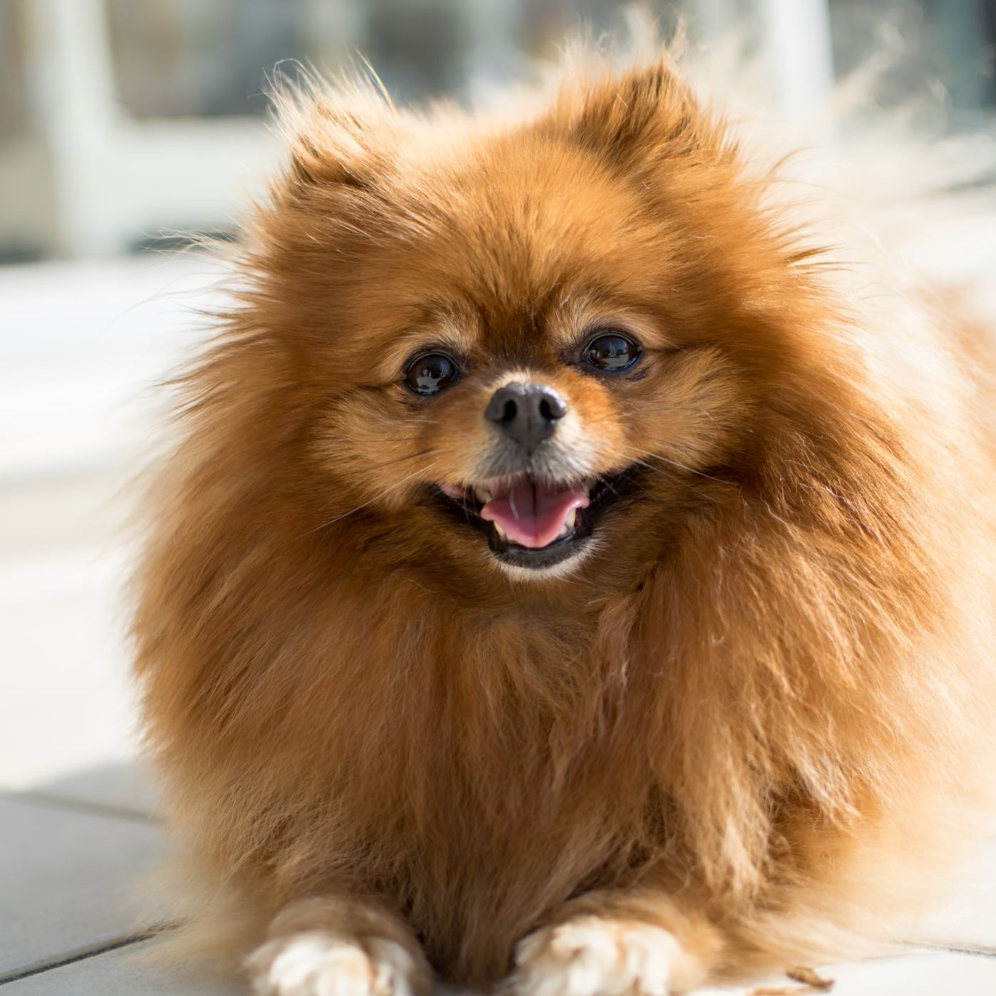 10 Best Small Dog Breeds for Limited Space