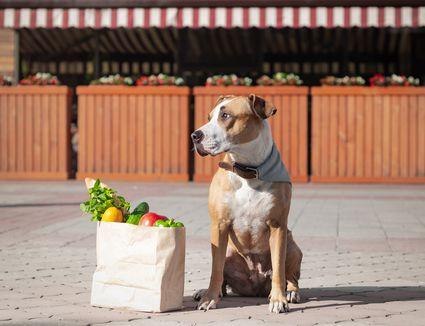 dog sitting on the sidewalk with bag of vegetables