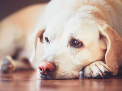 How to Treat Nicotine Poisoning in Pets