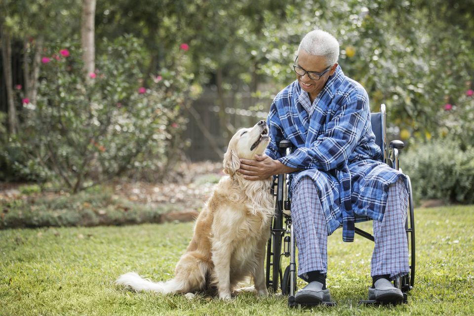 Senior hombre afroamericano en silla de ruedas acariciar perro