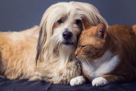 The Best Dog Breeds That Get Along With Cats