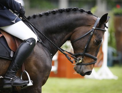 Harmony between horse and rider