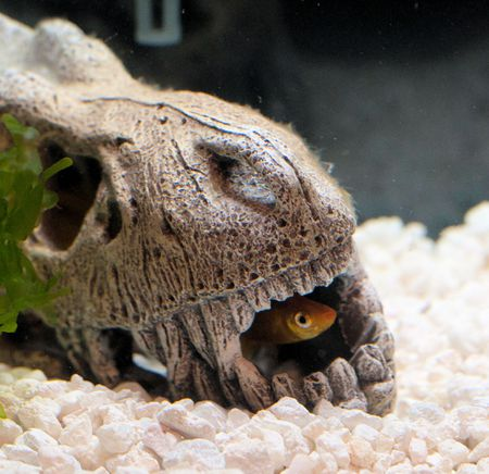 Coaxing Fish out of Hiding
