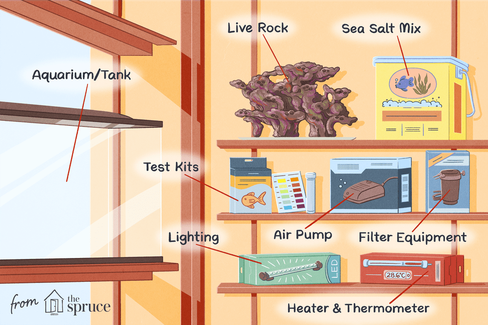 checklist for saltwater aquarium at home illustration