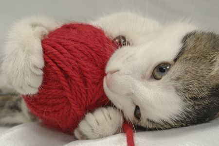 Kitten Playing With Red Ball Of Yarn Close Up
