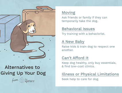 illustration of reasons not to give up your dog