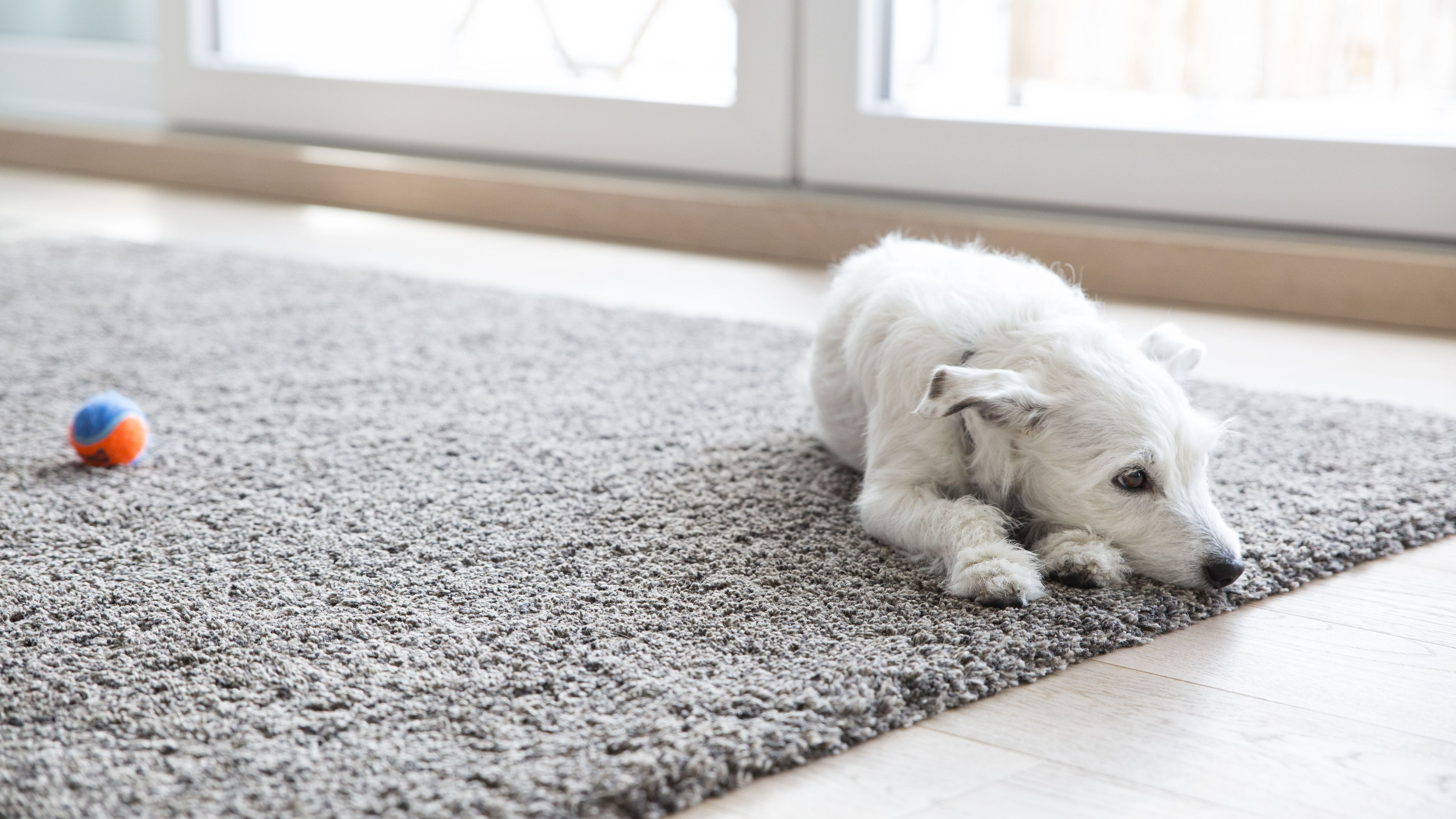 The 8 Best Carpet Cleaner Solutions for Pets in 2019
