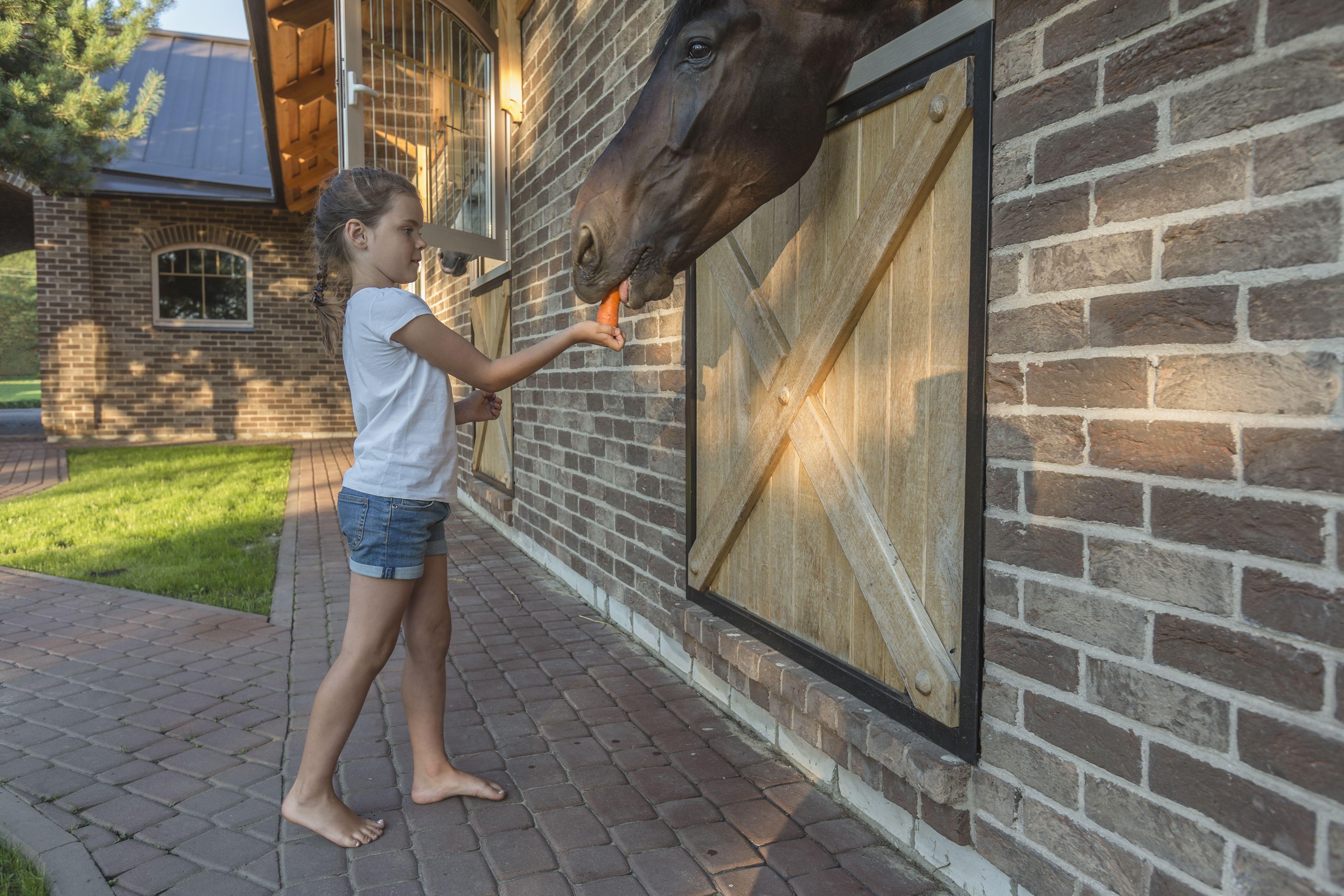 Girl feeding carrot to horse