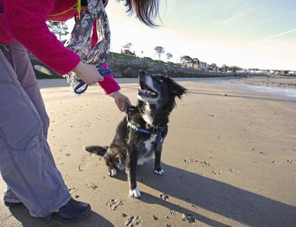 Woman training dog on sandy beach
