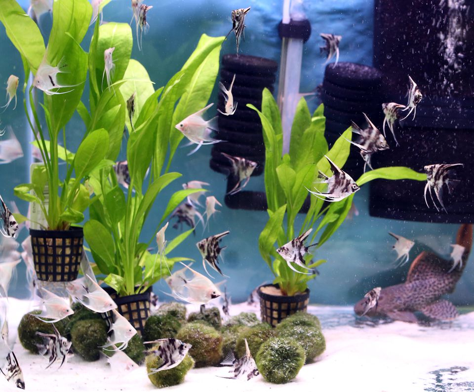 beautiful planted freshwater aquarium