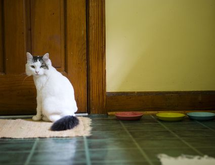 Cat sitting on kitchen rug by food bowls