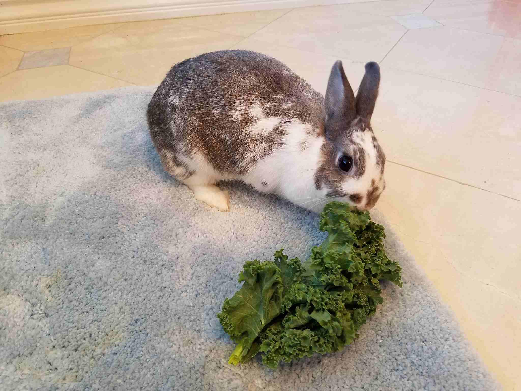 Rabbit Treats