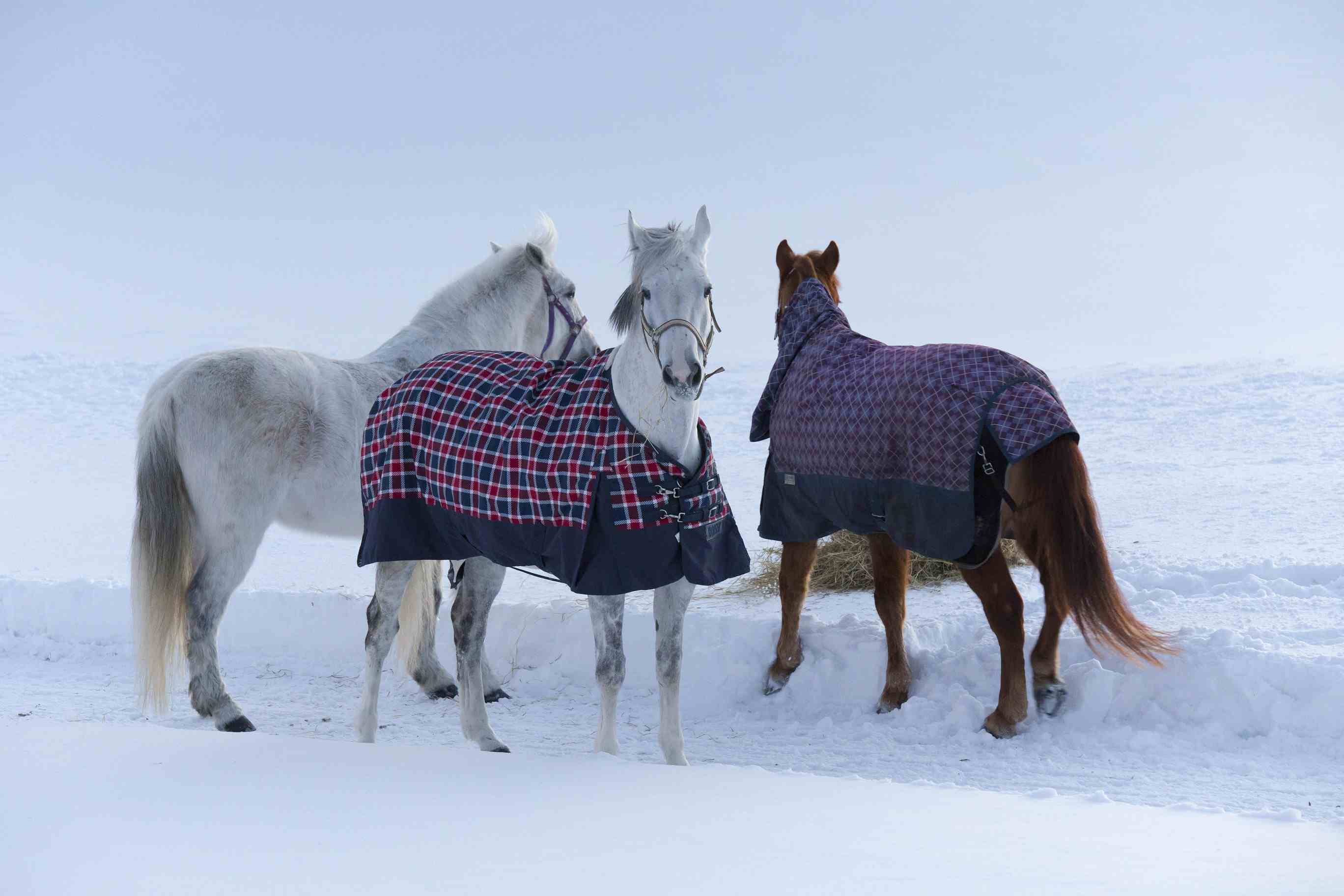 Horses bundled up