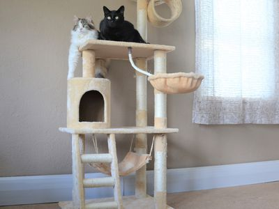 8 Diy Cat Tree Plans You Can Get For Free