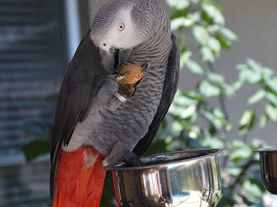 Top 5 Trainable Bird Species as Pets